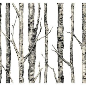 The Birches Wallpaper LL4758