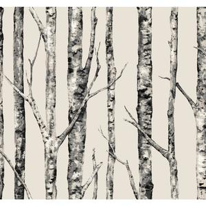 The Birches Wallpaper LL4759