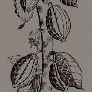 Cocoa 89/11046