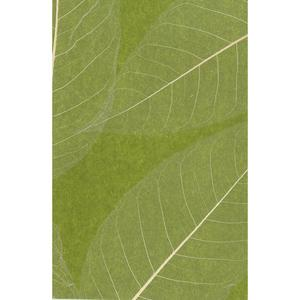 Natural Leaves Wallpaper SE1802