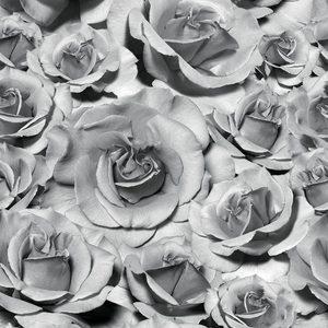 Rose 2 - Gray