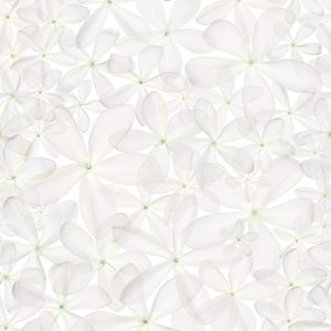 White Star - Green