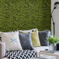 Ficus - Green